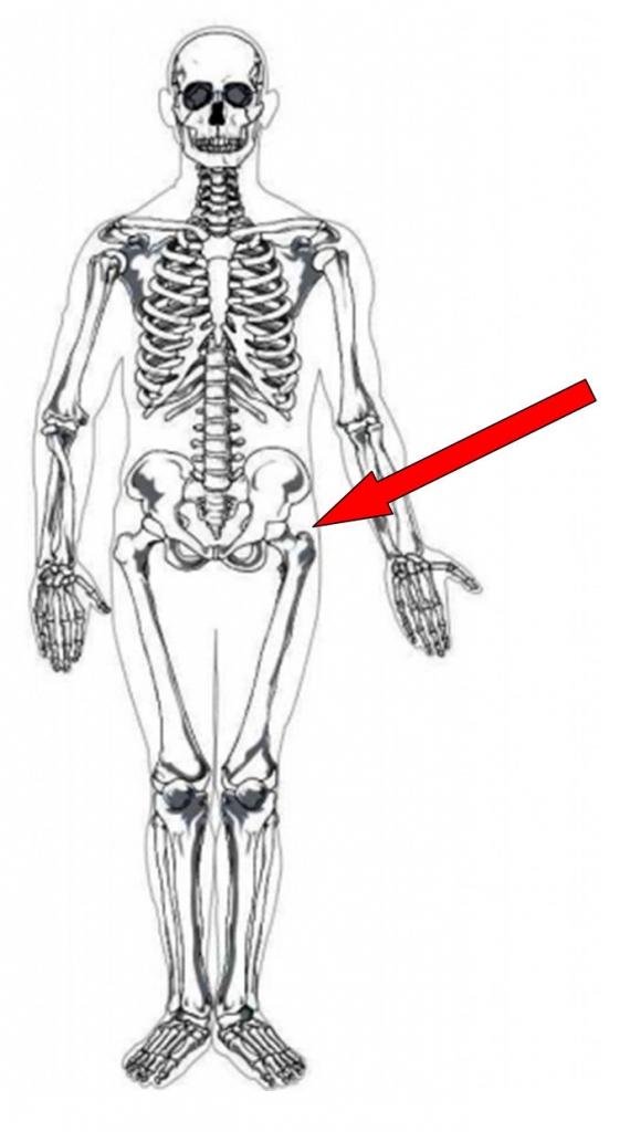 Do You Know Your Bones - Franklin Animal Clinic Inc. - Franklin, PA